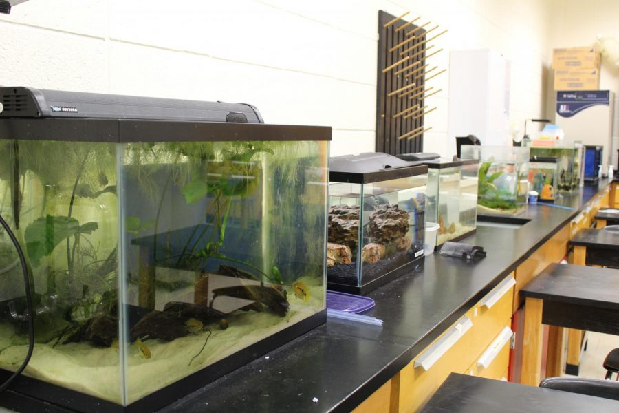 Zoos and aquariums strive toward realistic environments for animal health benefits